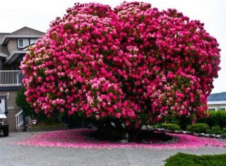 125 love style - Arbre japonais rose ...
