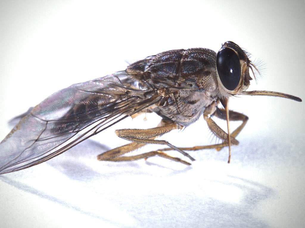 αγάπη έντομα που χρονολογούνται